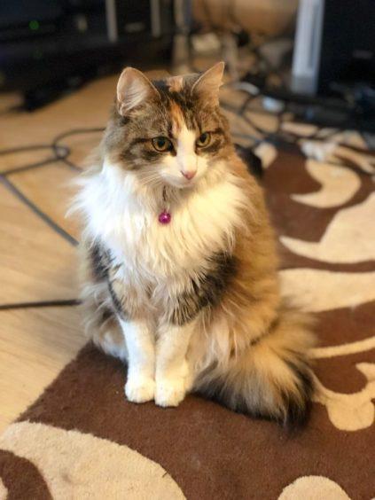 398 - Matilda (Cat)