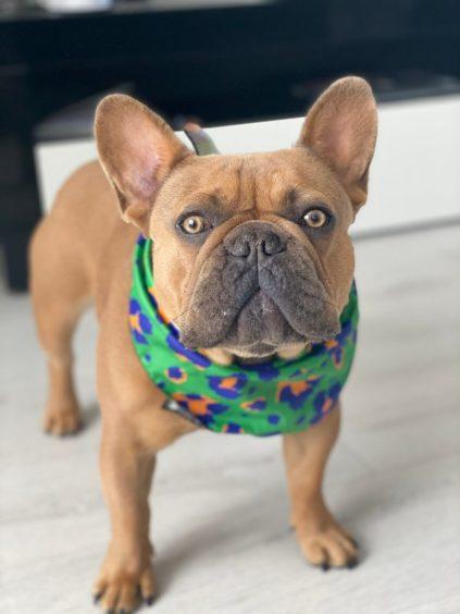 400 - Rocco (Dog)