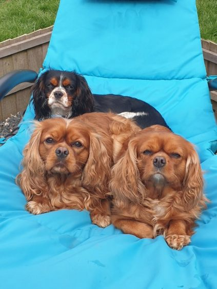 452 - Ruby, Charlie and Billy (Dogs)
