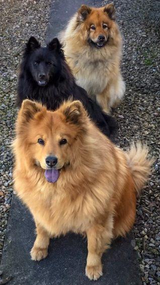 456 - Leia, Mika and Lexi (Dogs)