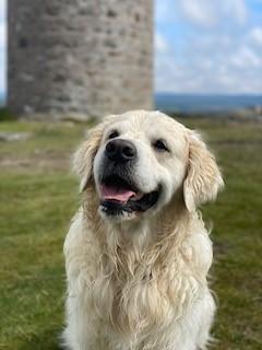 457 -Archie (Dog)