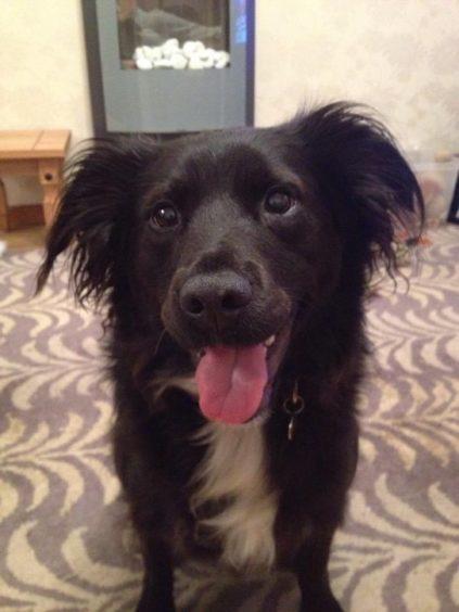 458 - Bailey Leslie (Dog)