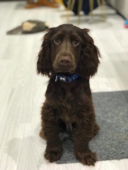 462 - Benji (Dog)