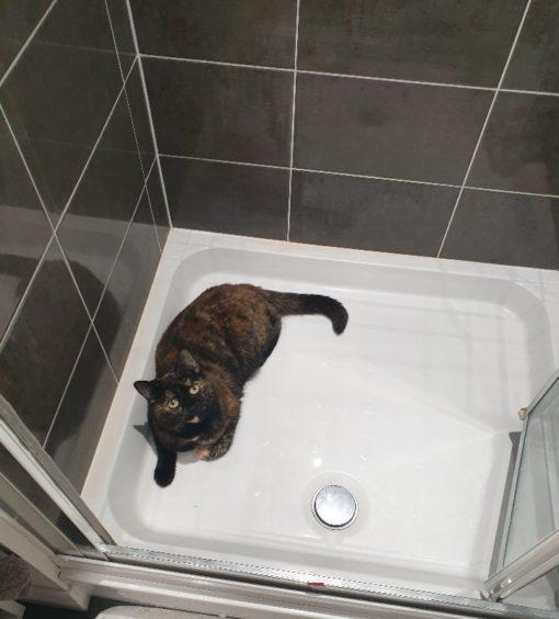 464 - Luna (Cat)