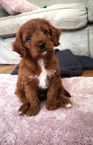 465 - Teddy (Dog)