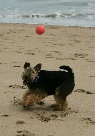 466 - Poppy Presslie (Dog)