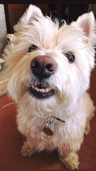 468 - Hamish Angus Martin (Dog)