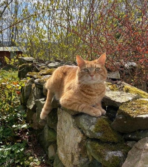 469 - Edgar Salvatore Baker (Cat)