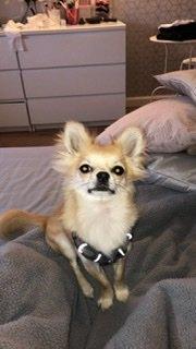 480 - Bobby (Dog)