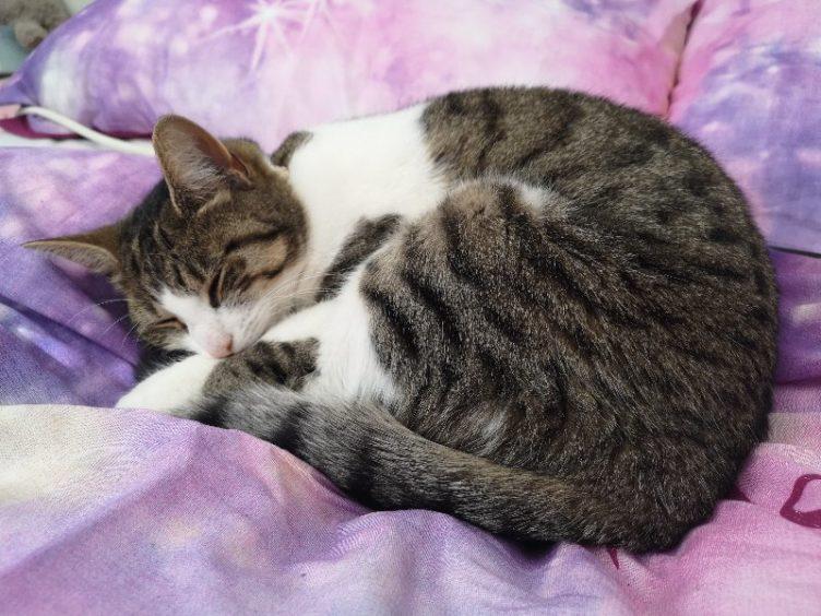 482 - Ellie (Cat)