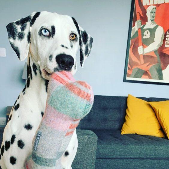 483 - Bernadette Van Bassanger (Dog)