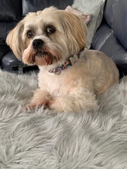 486 - Phoebe (Dog)