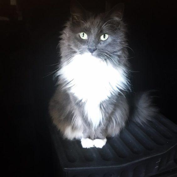 490 - Khloe (Cat)