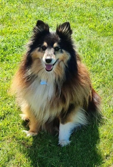 492 - Bella Forsyth (Dog)