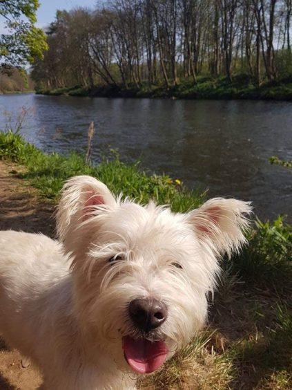 496 - Archie Miskimmons (Dog)