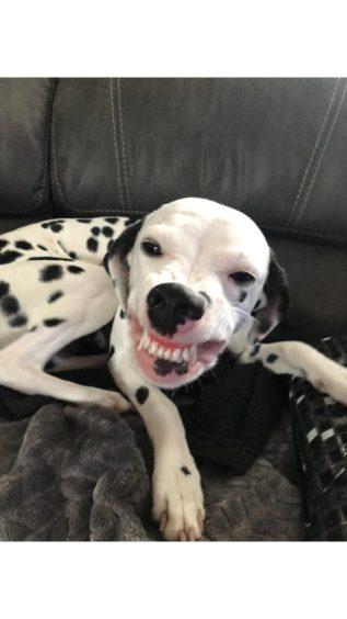 53 - Luna (Dog)