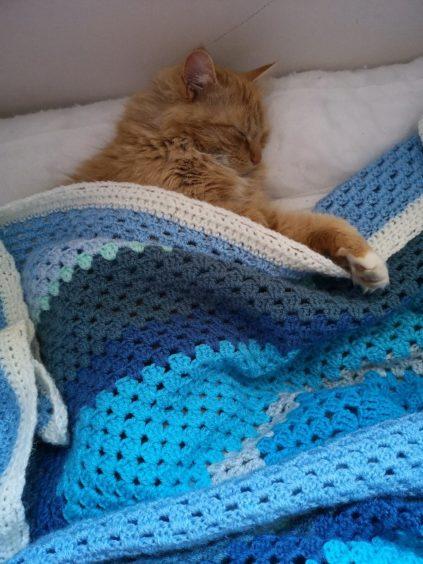 558 - Hamish (Cat)