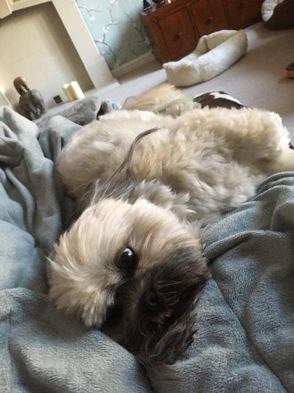 57 - Ollie (Dog)