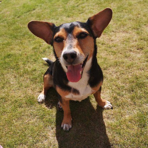 577 - Rolo (Dog)