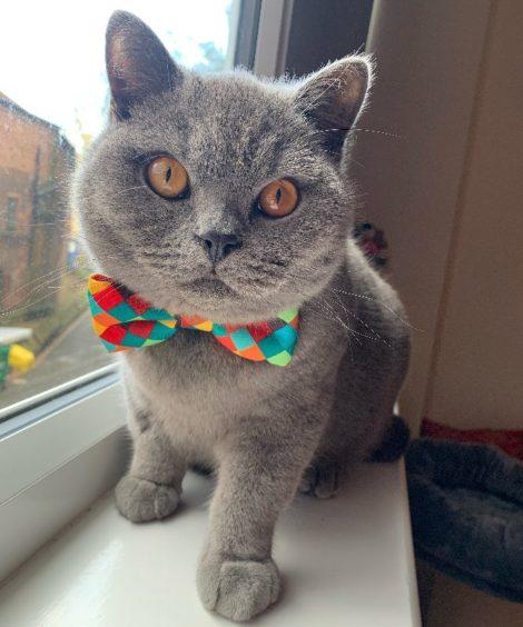579 - Gerald (Cat)