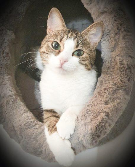 58 - Nalia (Cat)