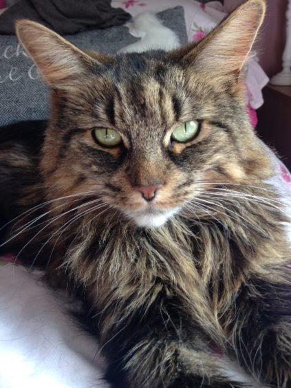 580 - Miss Memphis (Cat)