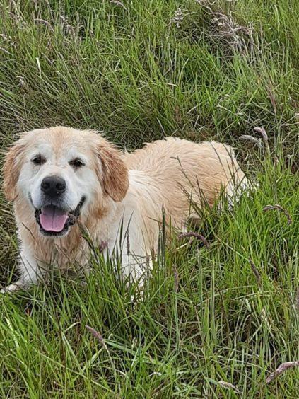 585 - Brody Taylor (Dog)