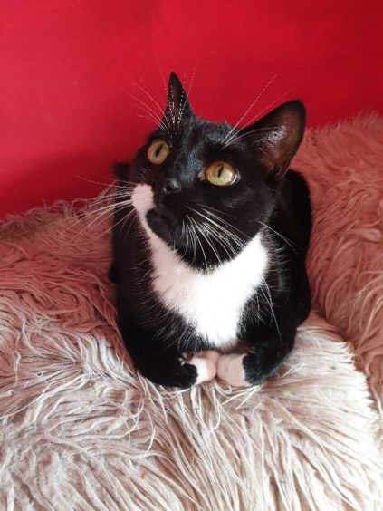 587 - Charley (Cat)