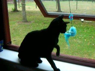 588 - Nina (Cat)