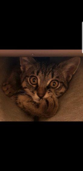 591 - Georgie (Cat)