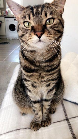 593 - Theo (Cat)