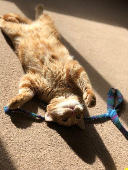 595 - Rusty (Cat)