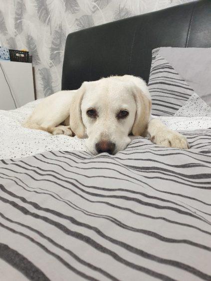 72 - Layla (Dog)
