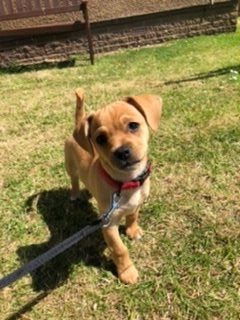 74 - Archie Robertson (Dog)