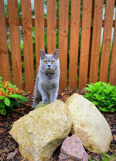 75 - Barney (Cat)