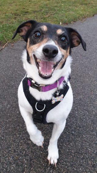 78 - Joey (Dog)