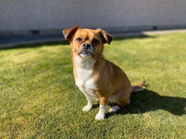 802 - Millie (Dog)