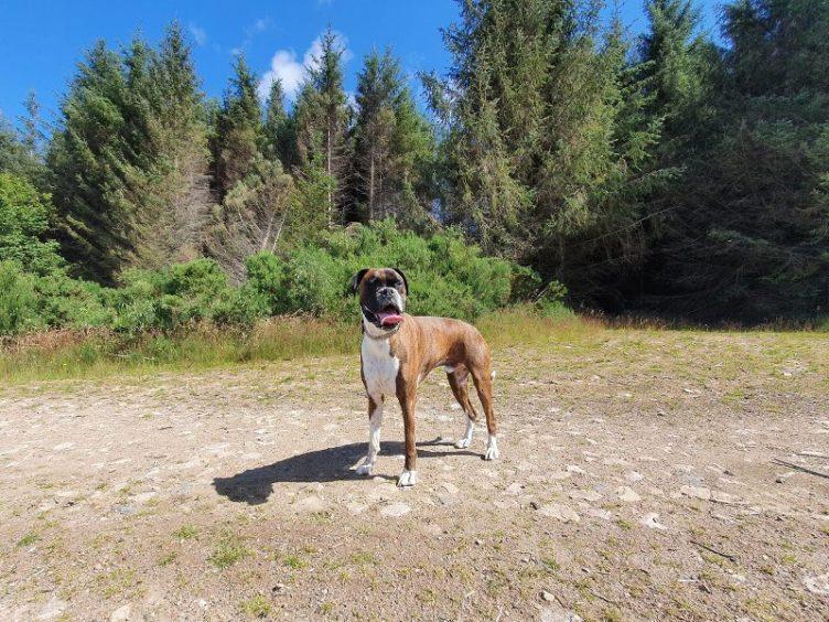 803 - Alfie (Dog)