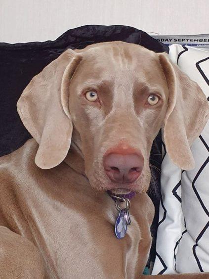 808 - Greta (Dog)