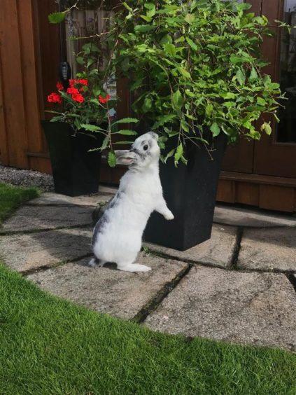 809 - Nibble (Rabbit)