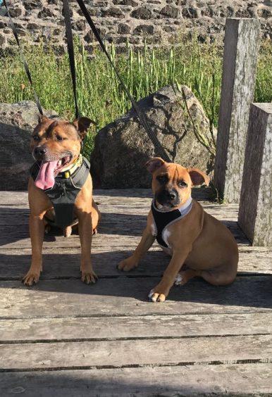 81 - Rio & Ruud (Dog)