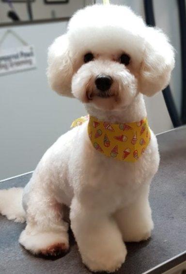 810 - Maisie (Dog)