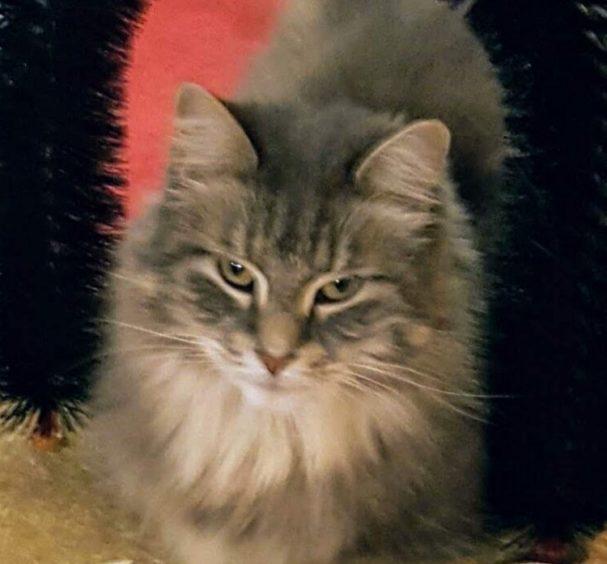 813 - Chloe (Cat)