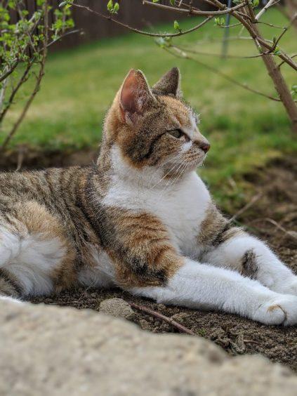 816 - Skylar (Cat)