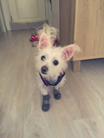 818 - Lexi (Dog)