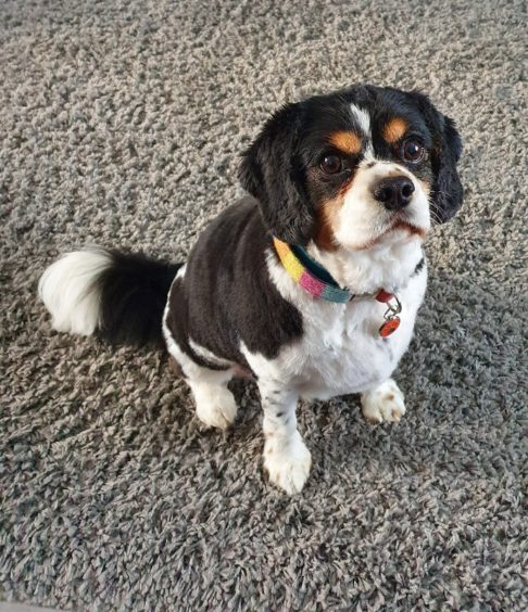 824 - Archie (Dog)