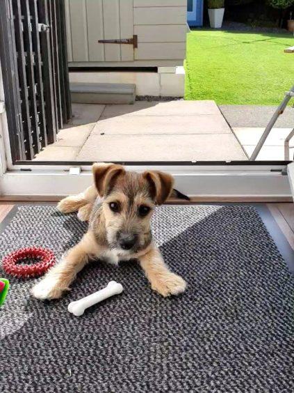 825 - Dexter (Dog)