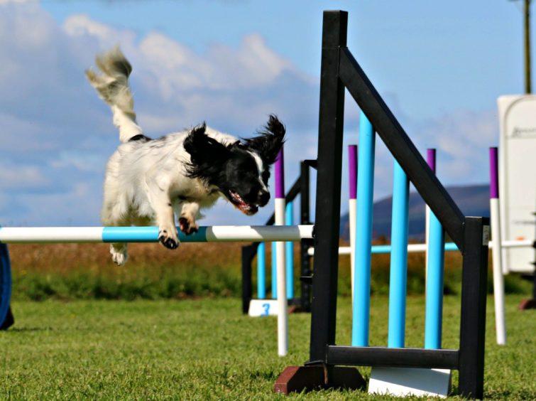 828 - Sophie (Dog)