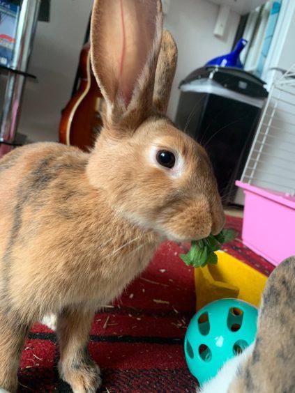 829 - Marcie (Rabbit)
