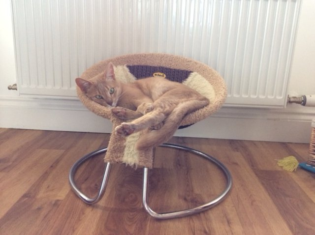833 - Harris (Cat)